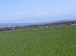 一面の麦畑と富士山.JPG